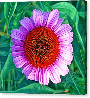 Pink Daisy By Jan Marvin Canvas Print
