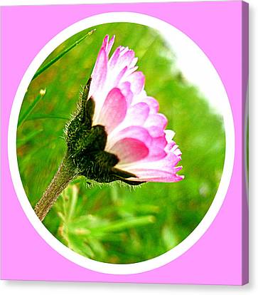 Pink Daisy  Canvas Print by The Creative Minds Art and Photography