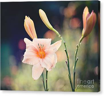 Pink Daylily Canvas Print by Erin Johnson