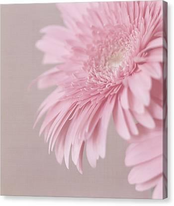 Pink Delight Canvas Print by Kim Hojnacki