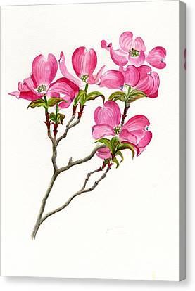 Pink Dogwood Array Canvas Print by Sharon Freeman