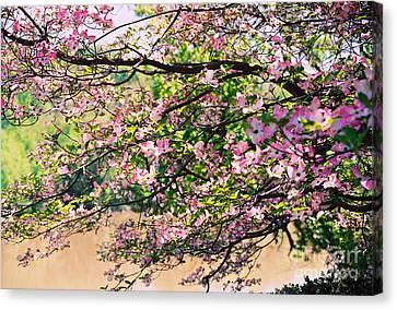 Pink Dogwood I Canvas Print by Anita Lewis