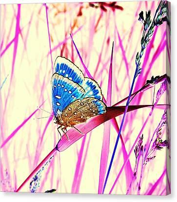 Pink Dream Canvas Print by Marianna Mills