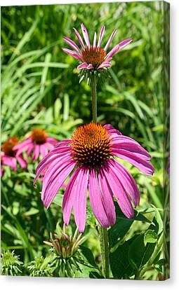Canvas Print featuring the photograph Pink Echinacea by Ellen Tully