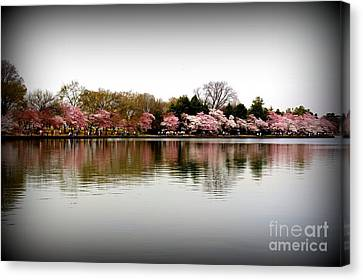 Pink Echoes Canvas Print