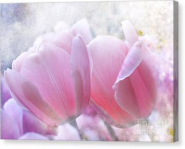 Pink  Canvas Print by Elaine Manley