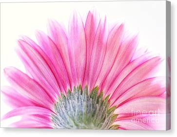 Pink Fan Canvas Print by Andrea Kollo