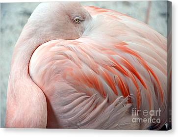 Canvas Print featuring the photograph Pink Flamingo II by Robert Meanor