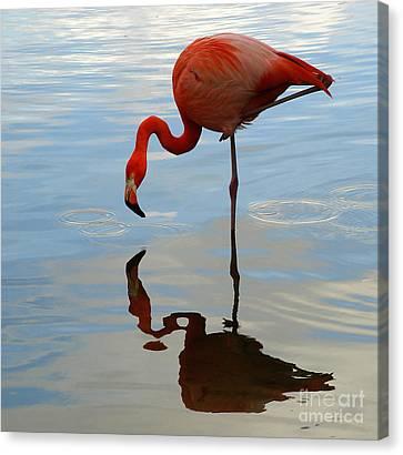 Pink Flamingo   Canvas Print by Raymond Earley