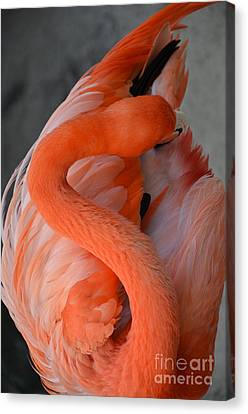 Pink Flamingo Canvas Print by Robert Meanor