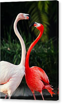 Pink Flamingos - Who's The Boss? Canvas Print