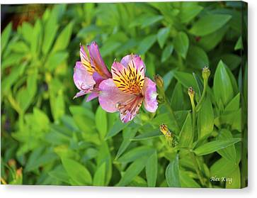 Pink Flower Canvas Print by Alex King