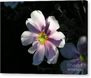 Pink Flower Canvas Print by Bev Conover