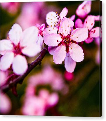 Canvas Print featuring the photograph Pink Flower by Chris McKenna