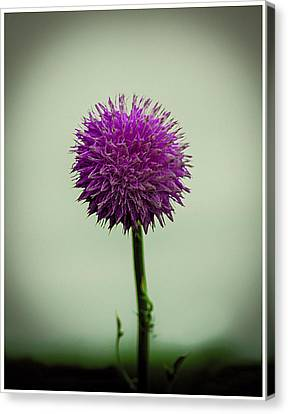 Pink Flower Canvas Print by CSH Photography