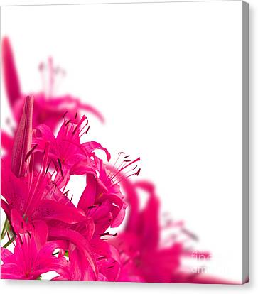 Pink Flower Frames Canvas Print by Boon Mee
