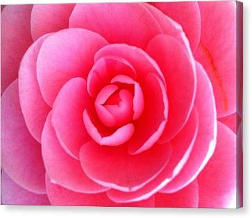 Pink Flower From Garden Canvas Print by Beril Sirmacek