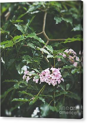 Pink Flower Canvas Print by Ivy Ho
