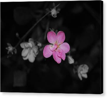 Canvas Print featuring the photograph Pink Flower  by Maggy Marsh