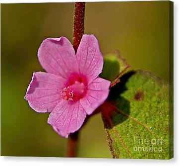 Canvas Print featuring the photograph Pink Flower by Olga Hamilton