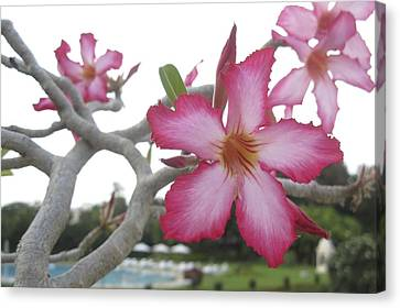 Pink Flower Canvas Print by Russell Smidt