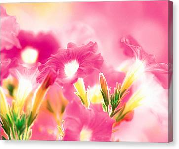Pink Flowers Canvas Print by Panoramic Images