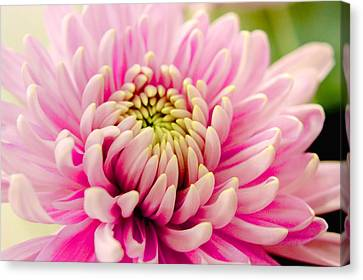 Canvas Print featuring the photograph Pink Passion by Dennis Baswell
