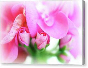 Macro Geranium Flower Canvas Print - Pink Geranium by Lisa Knechtel