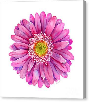 Pink Gerbera Daisy Canvas Print by Amy Kirkpatrick