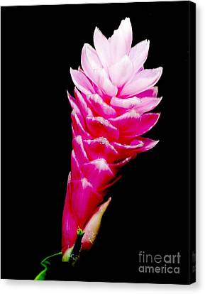 Pink Ginger Lilly Canvas Print