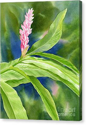Pink Ginger With Blue Green Background Canvas Print