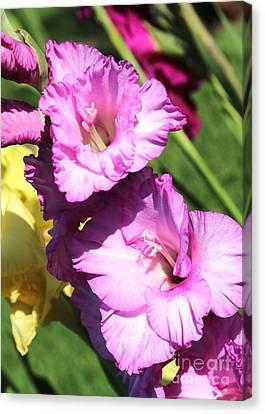 Pink Gladiolus Closeup Canvas Print