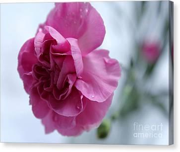 Pink Carnation Canvas Print - Pink Grace by Krissy Katsimbras