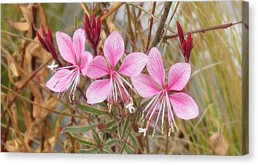Canvas Print featuring the photograph Pink Guara by Bonnie Muir