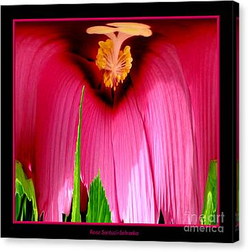 Pink Hibiscus Abstract Canvas Print by Rose Santuci-Sofranko
