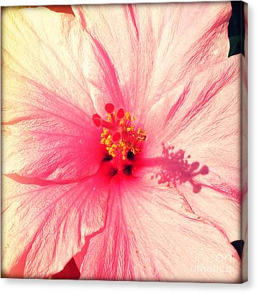 Pink Hibiscus Canvas Print by Chris Andruskiewicz