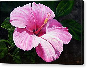 Pink Hibiscus Canvas Print by Lyndsey Hatchwell