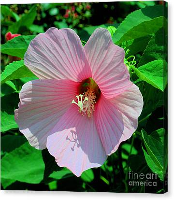 Pink Hibiscus Canvas Print by Luther Fine Art