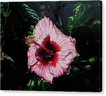 Pink Hibiscus Canvas Print by Raymond Perez