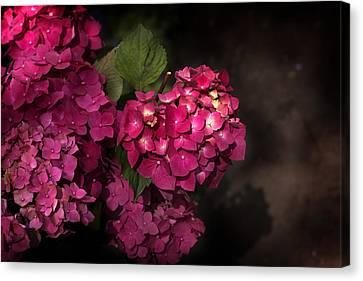 Pink Hydrangea Flowers In A Garden Canvas Print