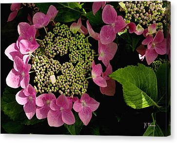 Canvas Print featuring the photograph Pink Hydrangea by James C Thomas