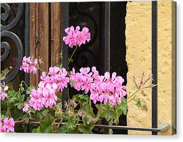 Canvas Print featuring the photograph Pink In My Window by Lew Davis