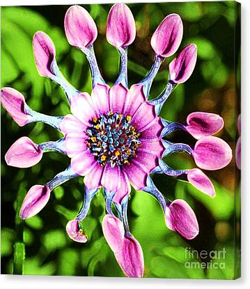 Pink Indian Painted Daisy Canvas Print by Kathleen Struckle
