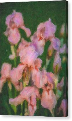 Pink Iris Family Canvas Print