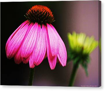 Canvas Print featuring the photograph Pink Is A Colour... by Al Fritz