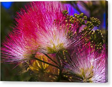 Canvas Print featuring the photograph Pink  by Ivete Basso Photography