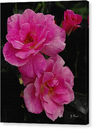 Canvas Print featuring the photograph Pink Knock Outs by James C Thomas