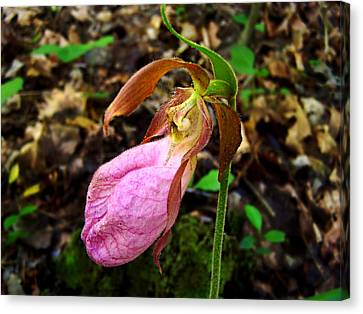 Pink Ladyslipper Orchid Canvas Print by William Tanneberger