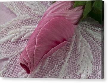 Pink Lavatera Bud Macro Canvas Print by Sandra Foster