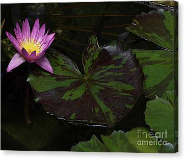 Pink Lotus Flower On Heart Shape Lily Pad Canvas Print by Linda Matlow